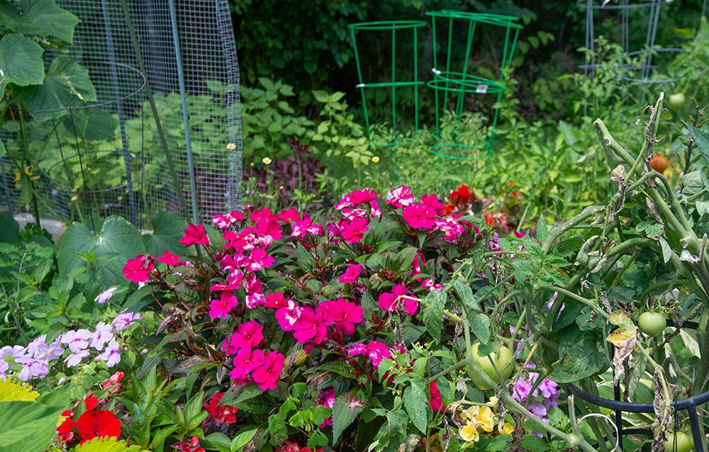 Amenities-garden